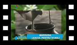 margusa-leacul-pentru-10-boli