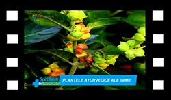 plantele-ayurvedice-ale-inimii